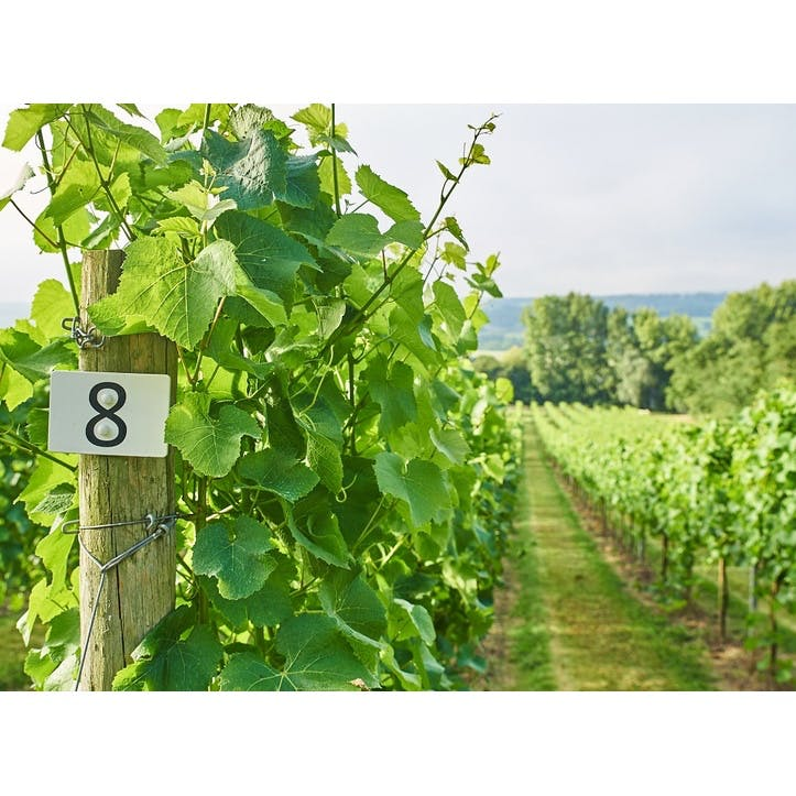 Adopt A Row Of Vines At Domaine du Grand Mayne