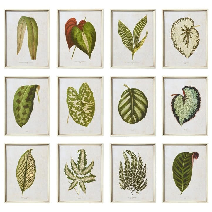 Exotic Leaf Framed Prints, Set of 12