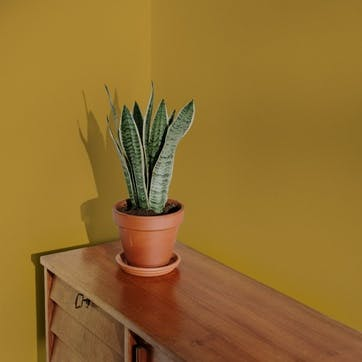 Flat Matt Wall & Ceiling Paint, Moritz Dark Yellow 2.5L