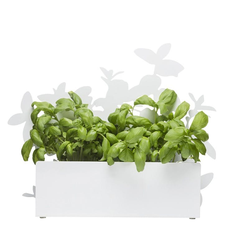 Form Herb Stand, White