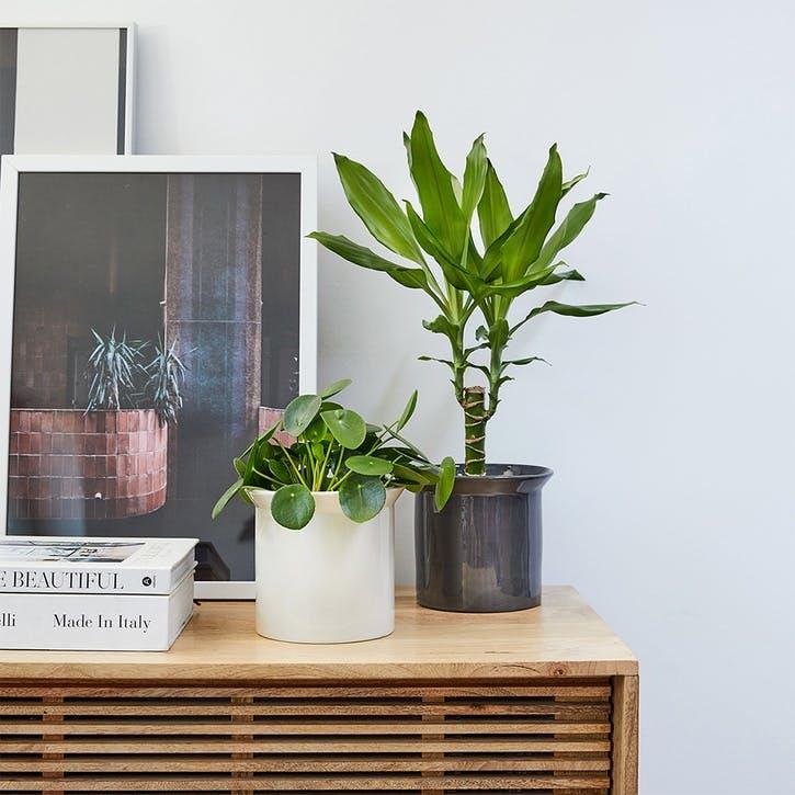 £50 Patch Plants Gift Voucher