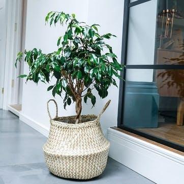 Seagrass Chevron, Lined Basket Medium, White