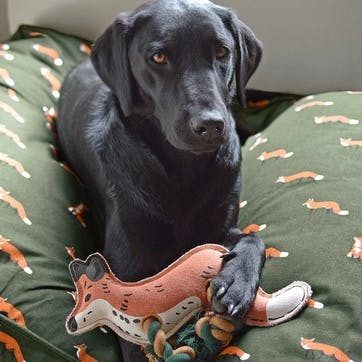 'Foxes' Dog Toy