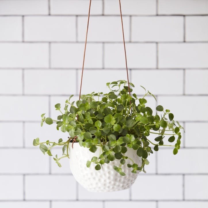 Indoor Hanging Pot, Dot Design