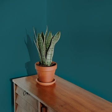 Flat Matt Wall & Ceiling Paint, Pool House Vibrant Blue-Green 2.5L