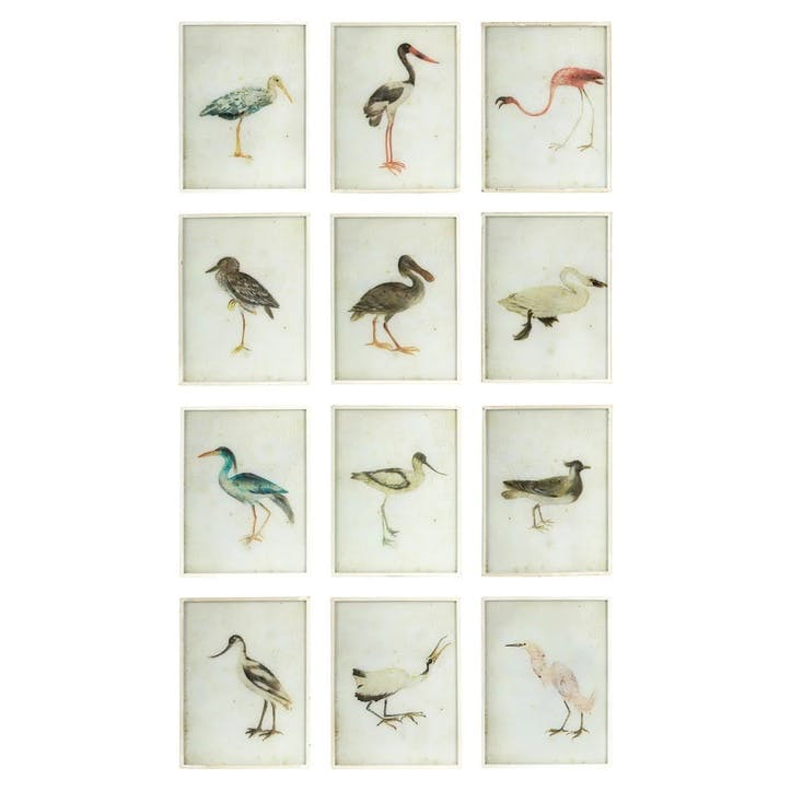 Bird Paintings, Set of 12