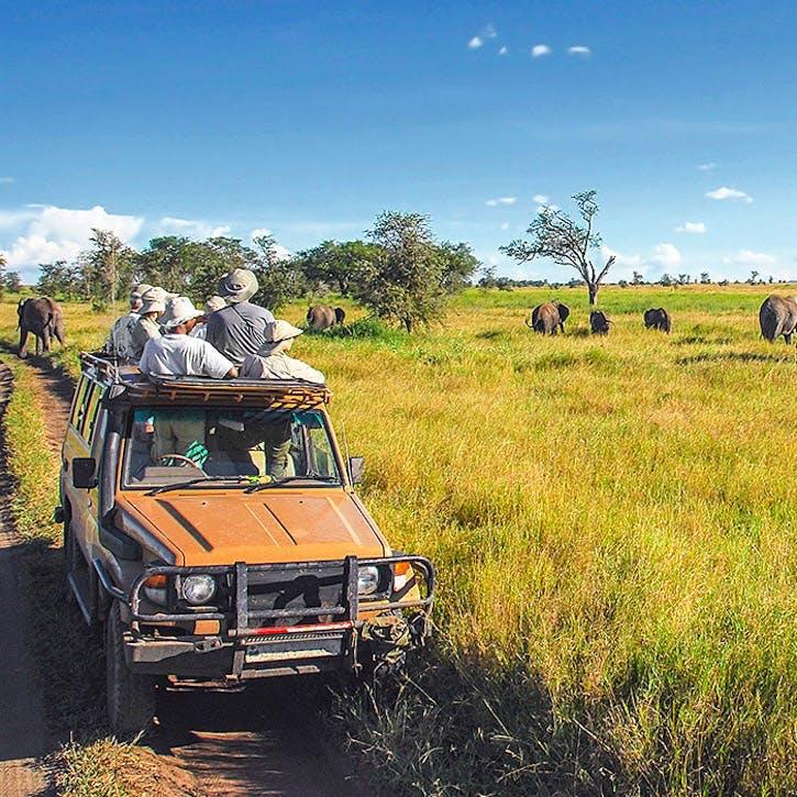 Wild Safari £150