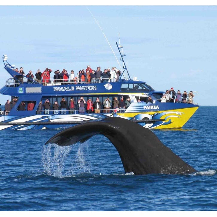 Honeymoon Whale Watching Experience £100
