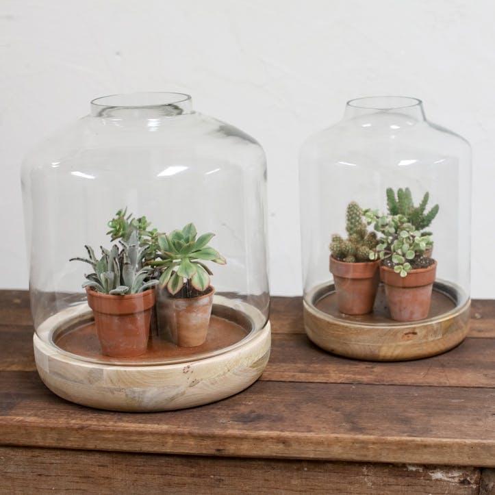 Igara Mango Wood Terrarium - Small