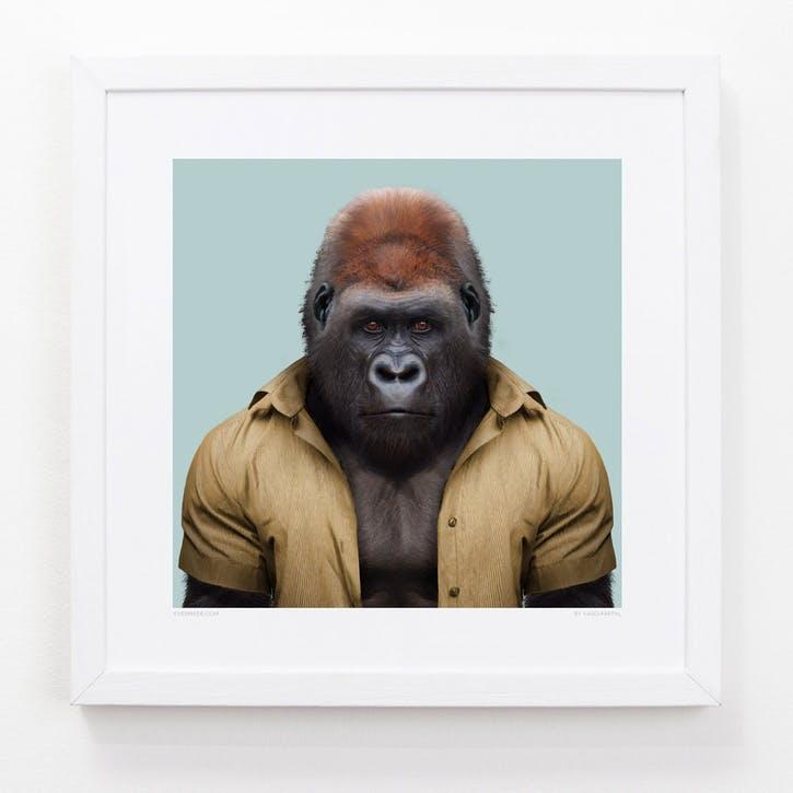 Zoo Portrait Western Lowland Gorilla, 33cm x 33cm