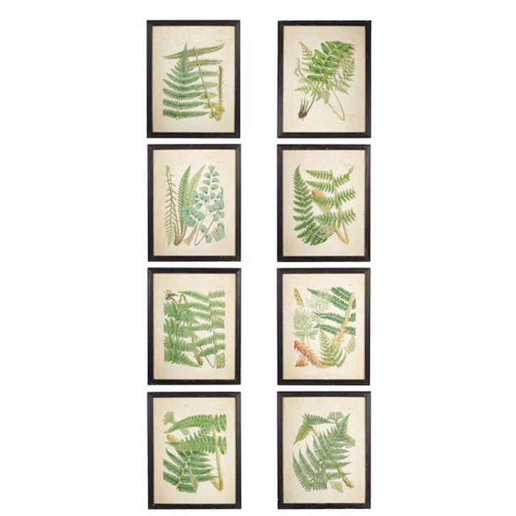 Framed Fern Prints, Set of 8