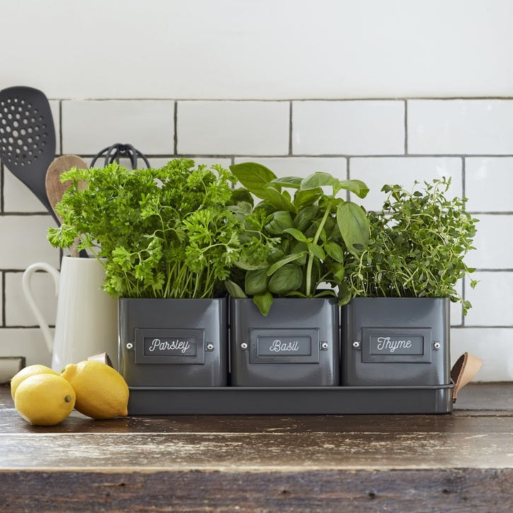 Enamelware Herb Pot, Set of 3, Charcoal
