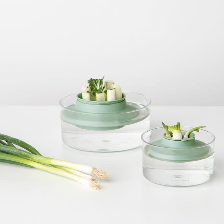 Tasty+ Herbs & Veggies Regrow Set