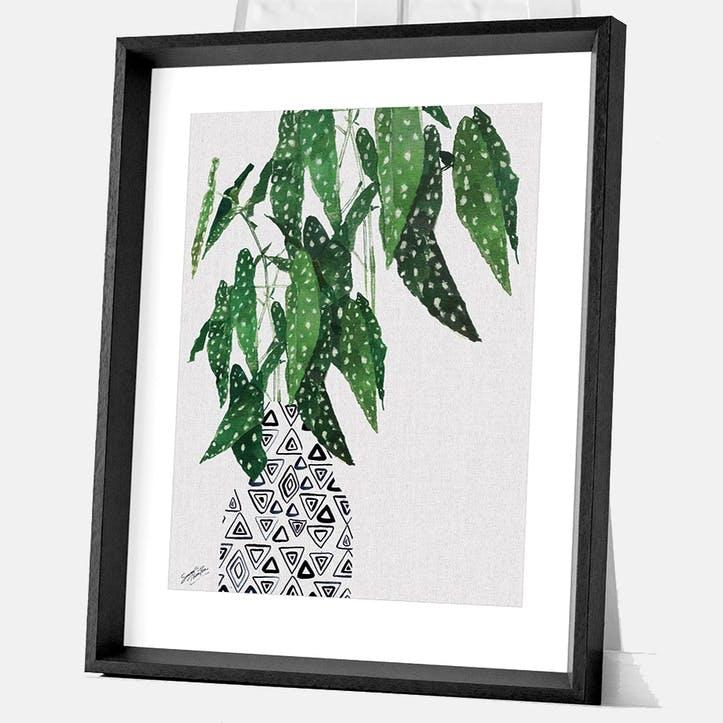 Summer Thornton Polka Dot Begonia Plant Framed Print, 55 x 45cm