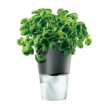 Self Watering Herb Pot, Grey