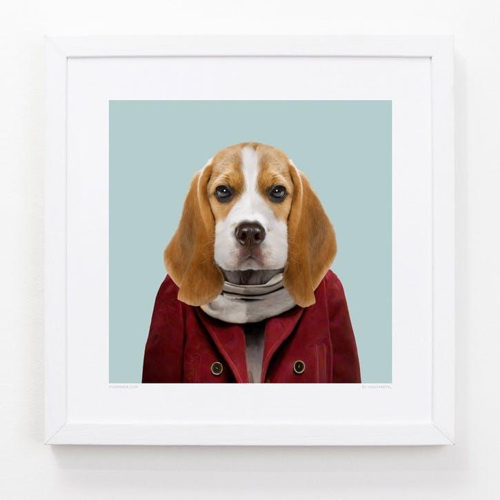Zoo Portrait Beagle Puppy, 33cm x 33cm
