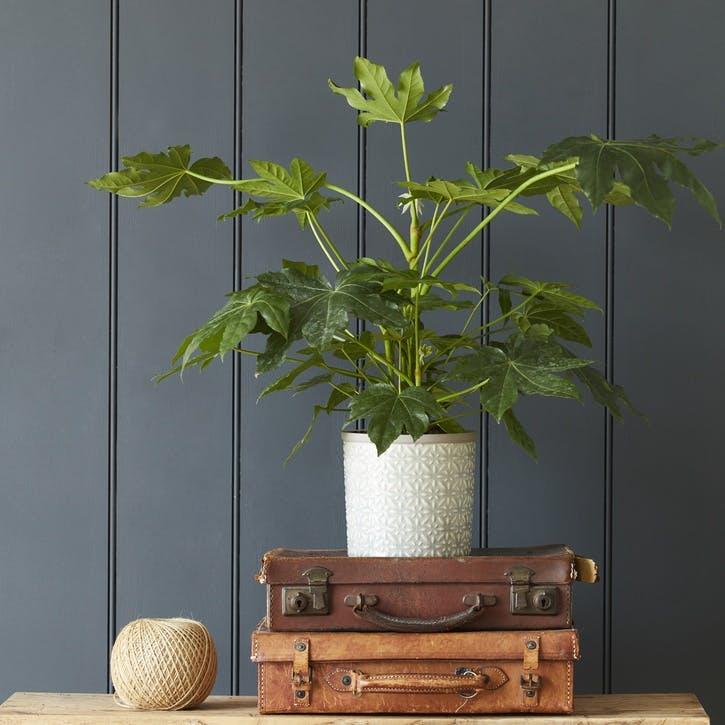 Tuscany Indoor Plant Pot, Grey