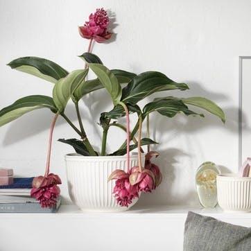 Hammershøi Flowerpot, White