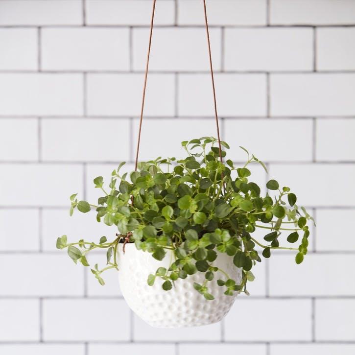 Indoor Hanging Pot, Dot Design