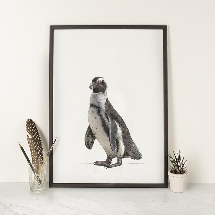 Jackass Penguin - A4