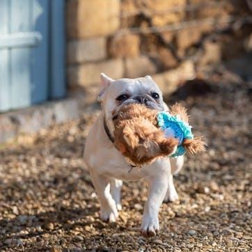 Plush Llama Dog Toy