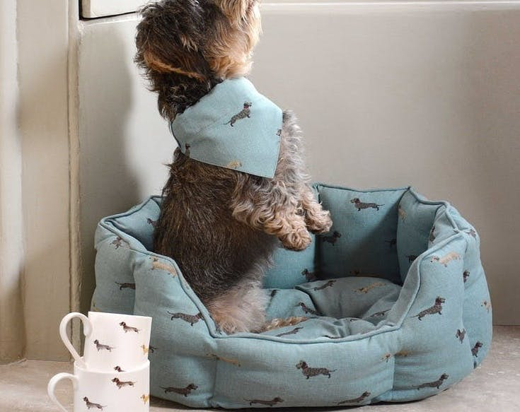 Perfect gifts for Pampered Pets