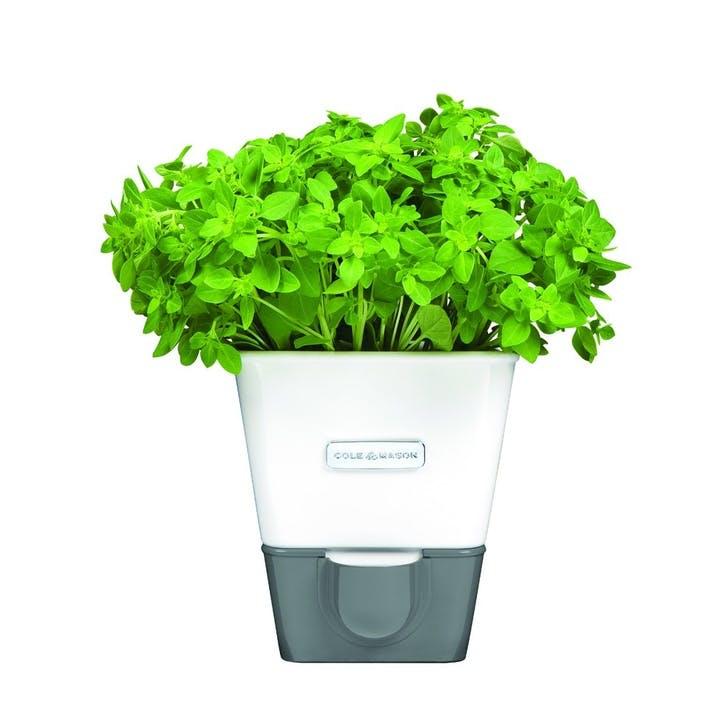 Fresh Self Watering Single Herb Keeper