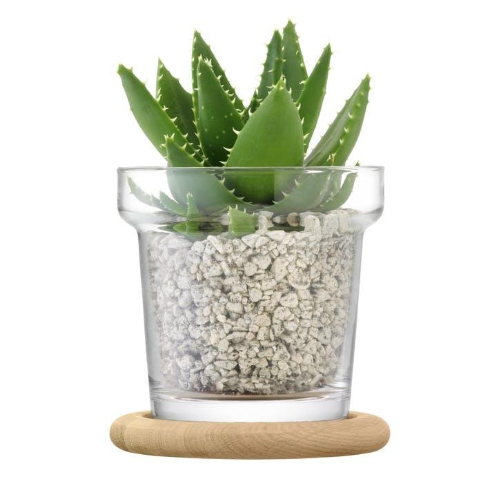 Plant Pot and Oak Base - 16.5cm