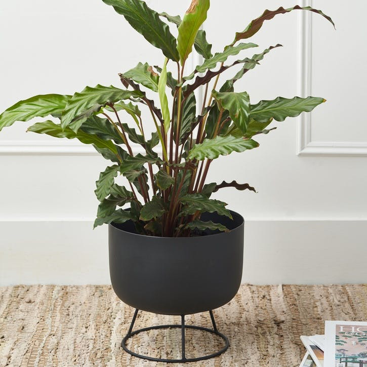 Matte Black Standing Planter