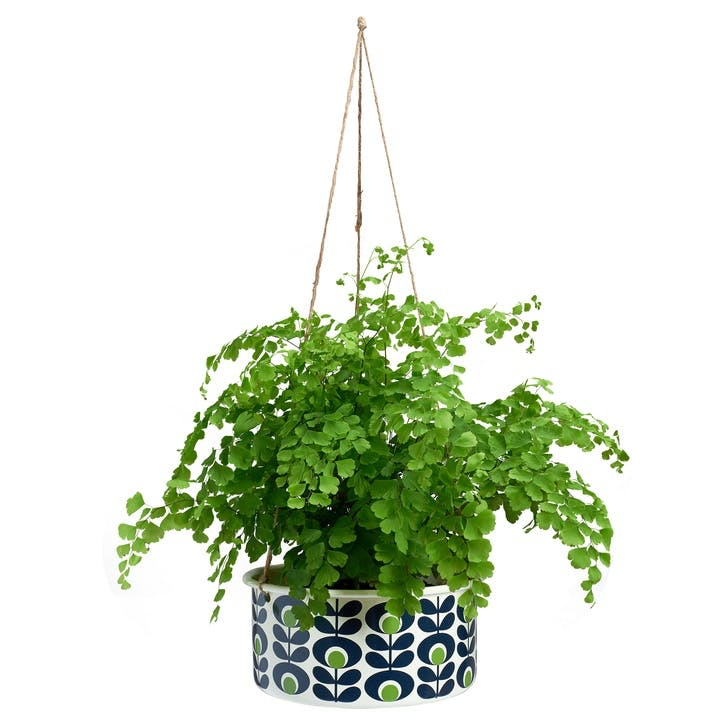 Spot Flower Oval Apple Handing Pot Plant, Large
