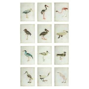 Bird Paintings, Set of 12