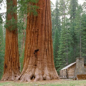 A Donation Towards One Life One Tree