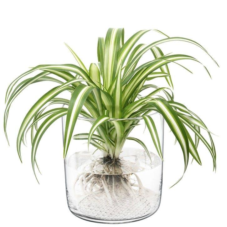 Market, Planter/Vase/Lantern, 16cm, Clear