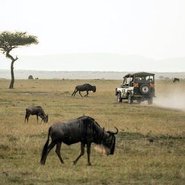 Wild Safari £100