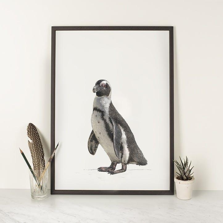 Jackass Penguin - A4
