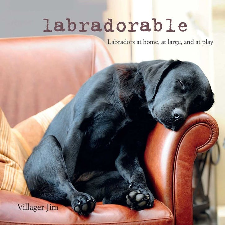 Labradorable