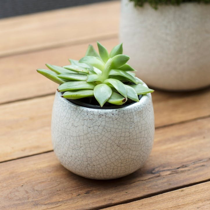 Ravello Plant Pot