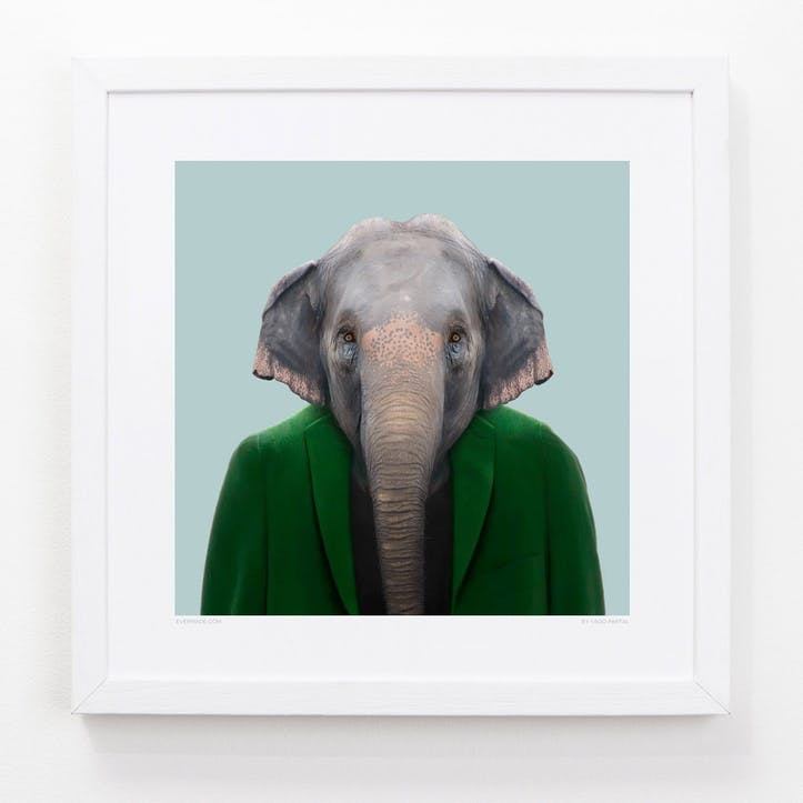 Zoo Portrait Asian Elephant, 33cm x 33cm