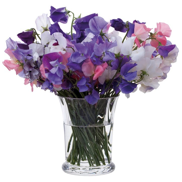 Florabundance Sweet Pea Vase