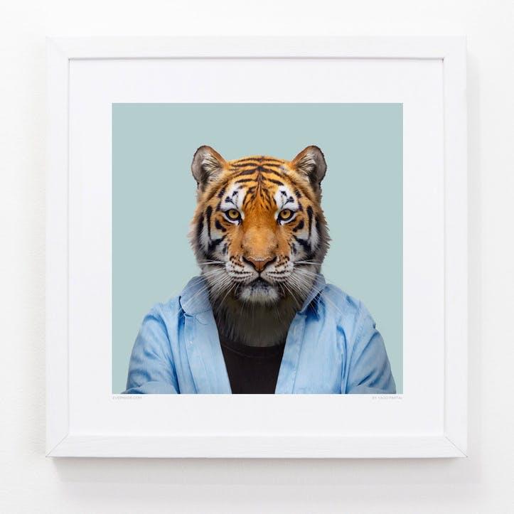Zoo Portrait Bengal Tiger, 33cm x 33cm