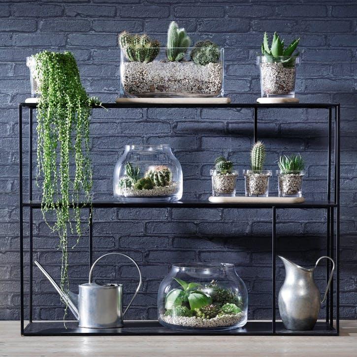 Plant Oblong Pot and Oak Base - 19.5cm