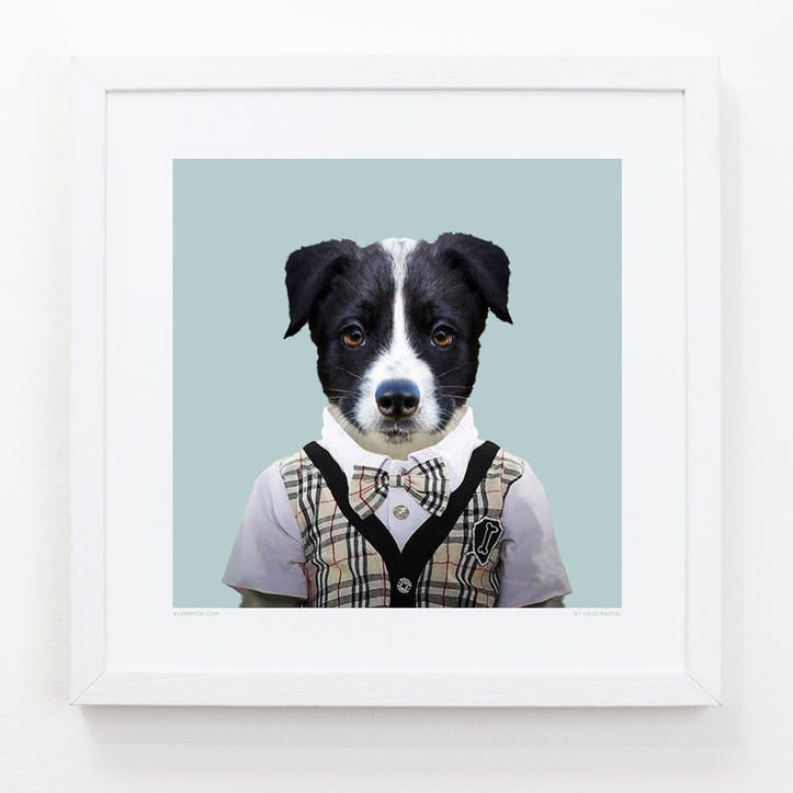 Zoo Portrait Print Border Collie, 33cm x 33cm