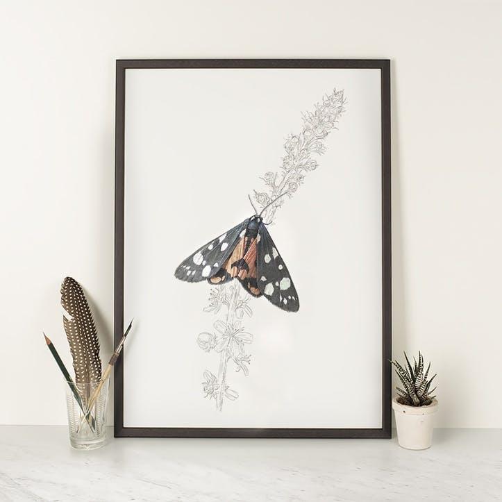 Scarlet Tiger Moth - A4