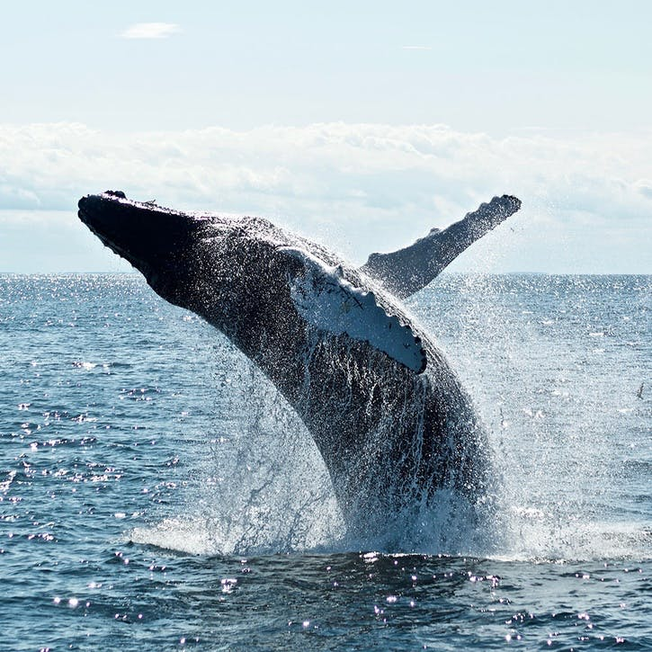 Honeymoon Whale Watching Experience £100