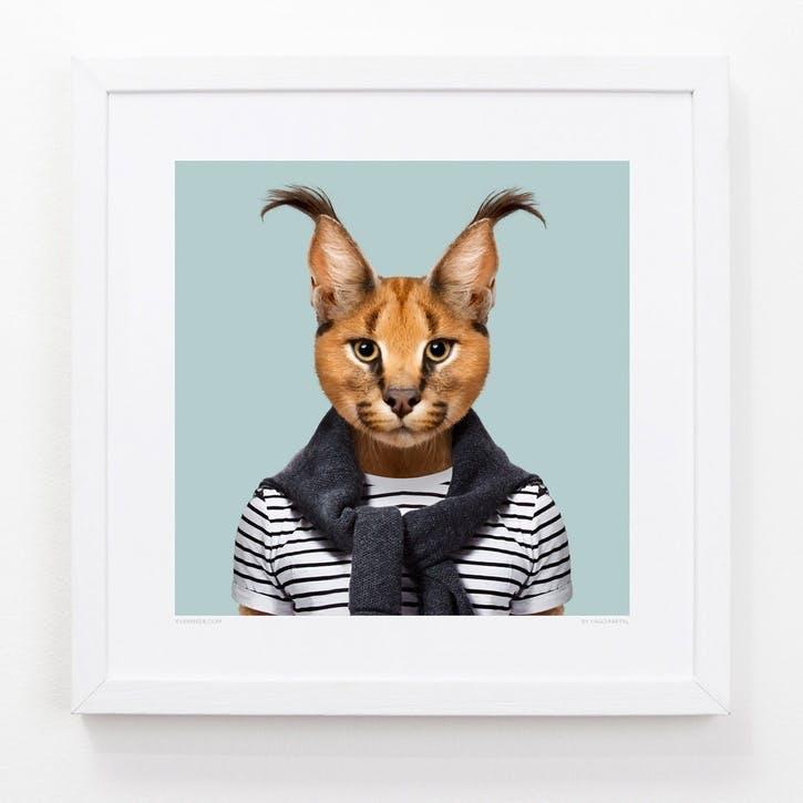 Zoo Portrait Caracal, 33cm x 33cm