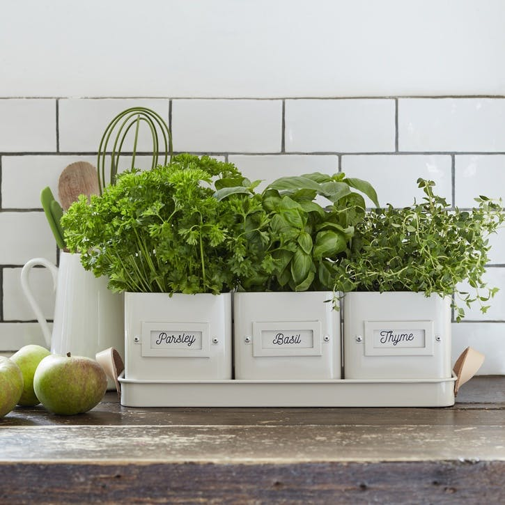 Enamelware Herb Pots and Tray; Stone
