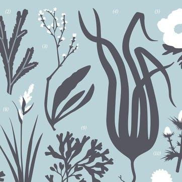British Coast Plant Life Screen Print, 30cm x 40cm, Duck Egg Blue