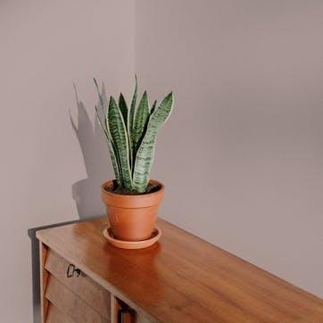Flat Matt Wall & Ceiling Paint, Ciao Sofia Reddish Pink 2.5L