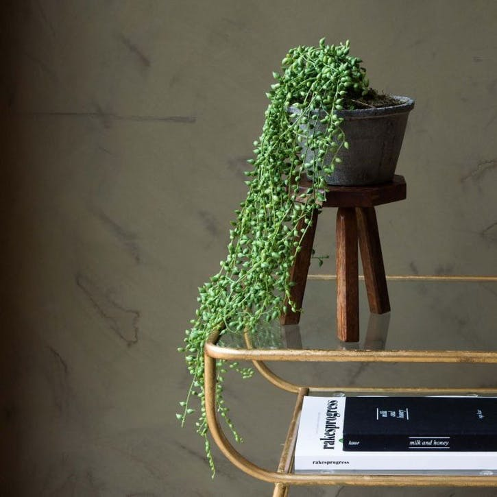 Faux String of Pearls Plant in Pot