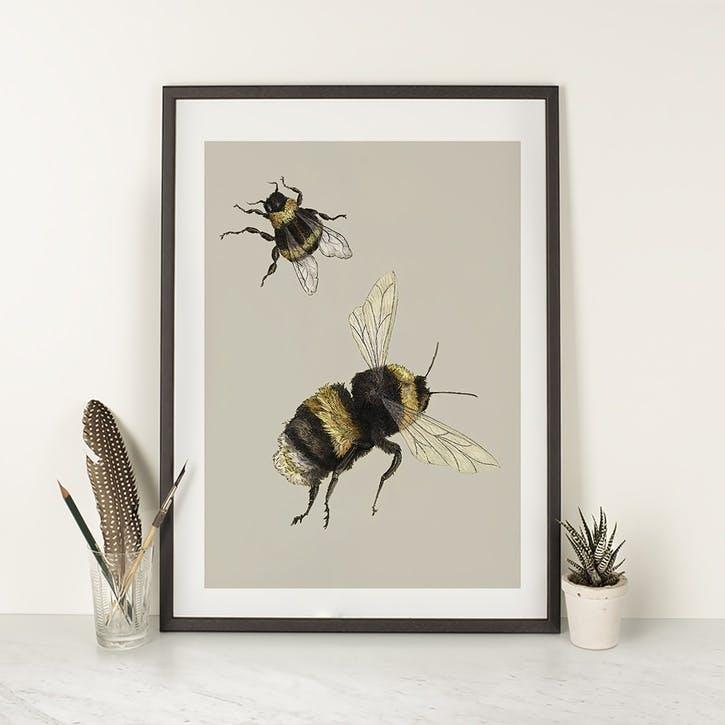 Bufftail Bumblebees Print - A2